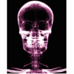 X-RAY VISION SKELETON SKULL - PINK PHOTO CUT OUT