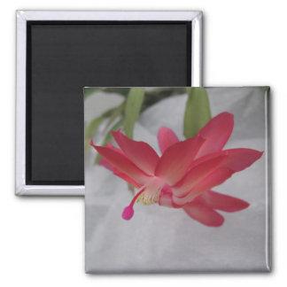 Xmas Cactus Flower Square Magnet