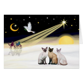 Xmas Dove / 3 Siamese cats Greeting Card