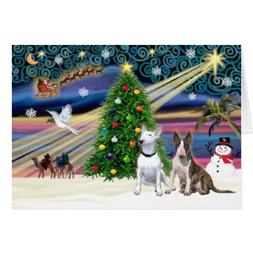 Xmas Magic-Bull Terrier Pair Greeting Cards