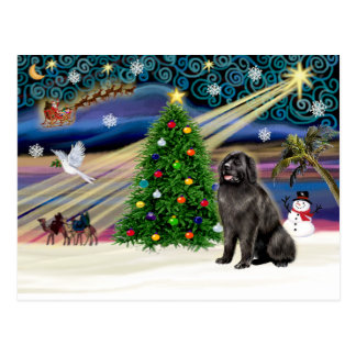 Xmas Magic-Newfie blksit Postcard