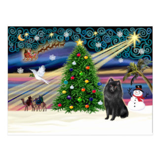 Xmas Magic-Schipperke Postcard