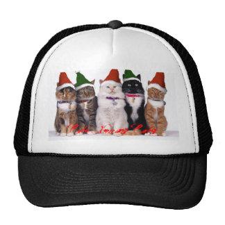 xmascats, Cute Xmas Cats, Xmas hats