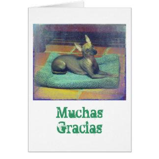 Xolo Note Card: Muchas Gracias Note Card