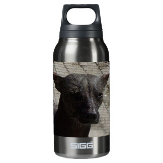 xolo.png 10 oz insulated SIGG thermos water bottle