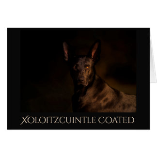 Xoloitzcuintle Coated Geeting Card