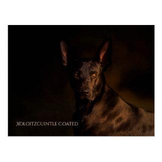 Xoloitzcuintle Postcard