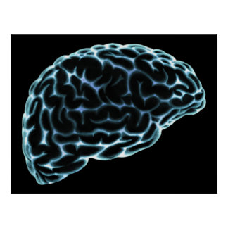 XRAY BRAIN SIDE VIEW BLUE POSTER