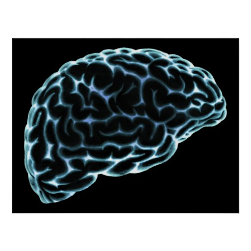 XRAY BRAIN SIDE VIEW BLUE POSTERS