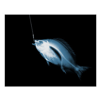 XRAY HOOK FISH BLACK BLUE POSTERS