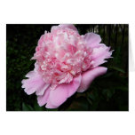 XX- Awesome Pink Peony Floal Photography Greeting Cards