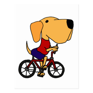 XX- Yellow Labrador Dog Riding Bicycle Cartoon Postcard