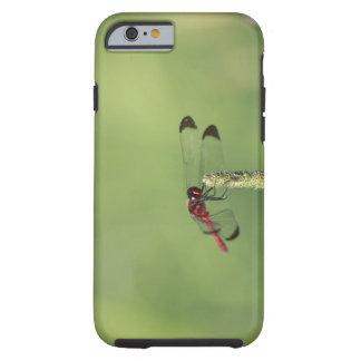 Yamanashi Prefecture, Honshu, Japan Tough iPhone 6 Case