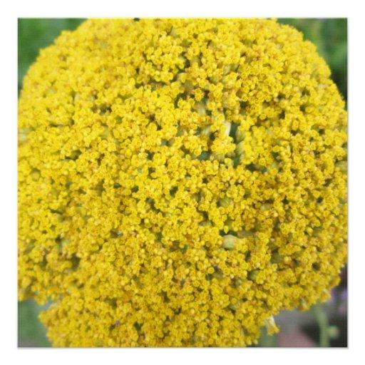 Yarrow Flower Golden Yellow Custom Invitations