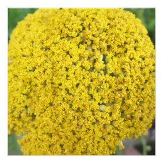 Yarrow Flower Golden Yellow Custom Announcements