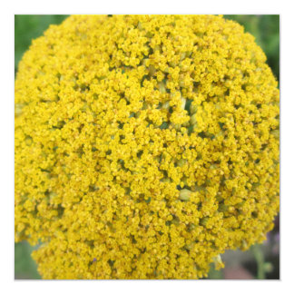 Yarrow Flower Golden Yellow Personalized Invitation