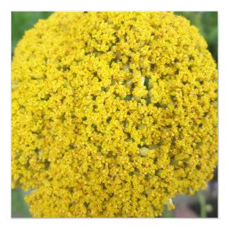 Yarrow Flower Golden Yellow 5.25x5.25 Square Paper Invitation Card