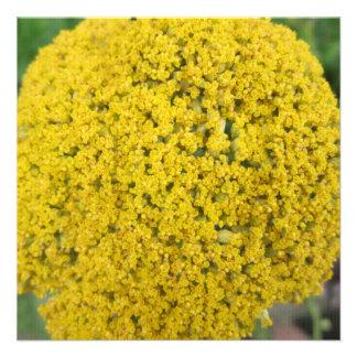 Yarrow Flower Golden Yellow Personalized Invitations