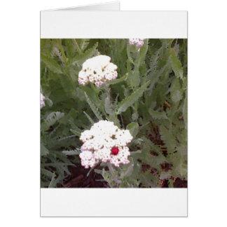 Yarrow with Ladybird Card