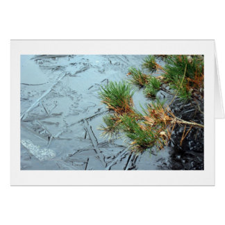 Yashiro Garden Mugo Pine and Ice on Pond Greeting Card