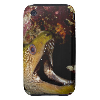 Yawning and intimidating mouth of a Yellowmargin Tough iPhone 3 Covers