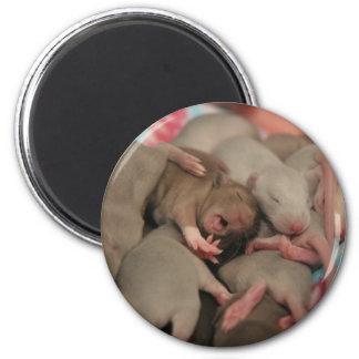 Yawning baby rat magnet