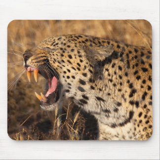 Yawning Leopard Shows Teeth Mouse Mat