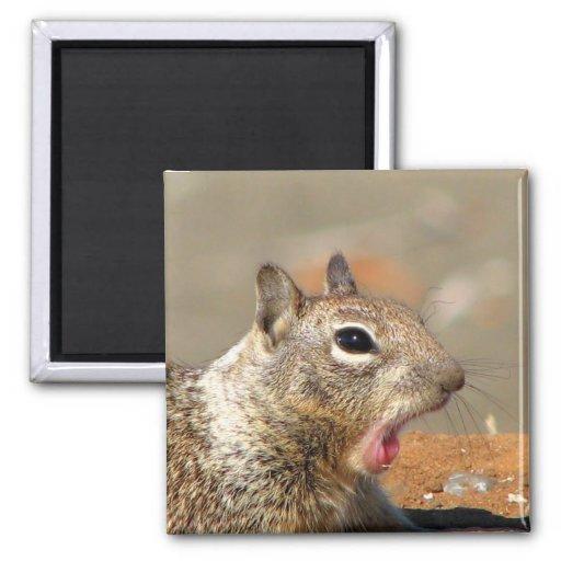Yawning Squirrel Magnet