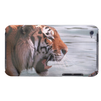 Yawning Tiger in Water iPod Touch Covers