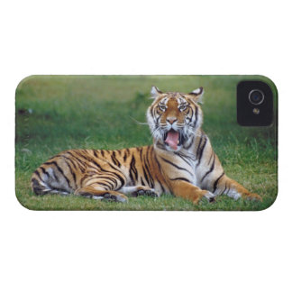Yawning Tiger iPhone 4 Cover