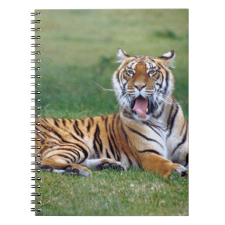 Yawning Tiger Spiral Notebook