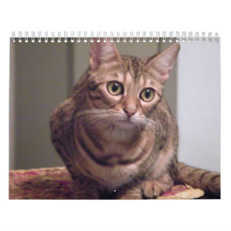 Year of the Bengal Cat Calendar