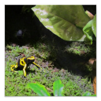 Yello Dart Frog Posters