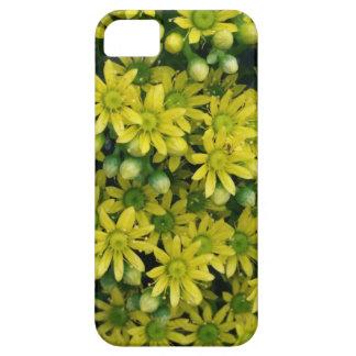 Yellow aeonium flower blossoms on phone case