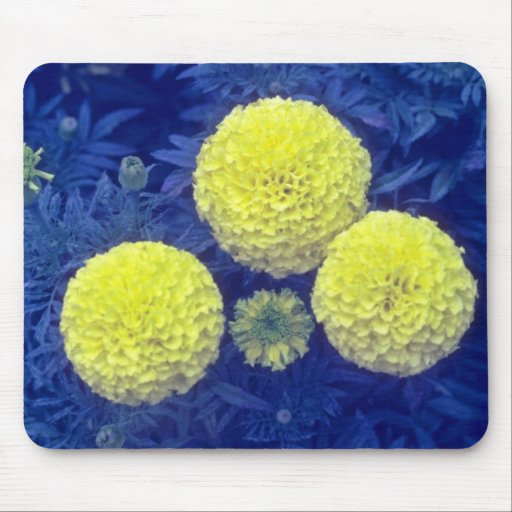 yellow African Marigold (Tagetes Erecta) flowers Mouse Pad