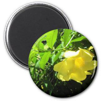 Yellow Allamanda 6 Cm Round Magnet