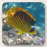 Yellow and Black Angel Fish