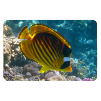 Yellow and Black Angel Fish Magnet