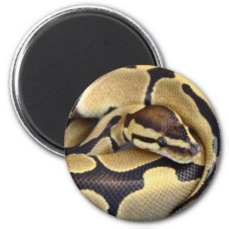 Yellow and Black Ball Python 3 Magnet