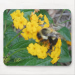 yellow and black Bee on yellow flower Mouse Pads
