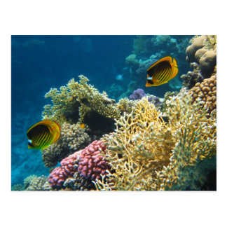 Yellow and Black Butterfly Fish Post Card