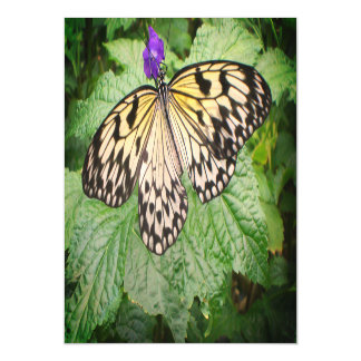 Yellow and Black Butterfly Magnetic Card