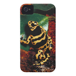 Yellow and Black Frog iPhone 4 Case