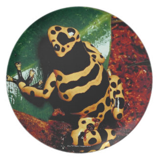 Yellow and Black Frog Plate