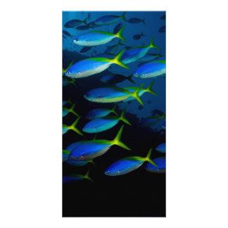 Yellow and blueback fusil fish in Fiji Custom Photo Card