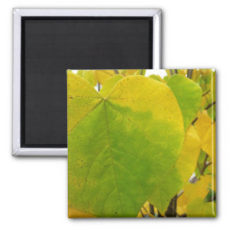 Yellow and Green Redbud Leaves Autumn Nature Square Magnet