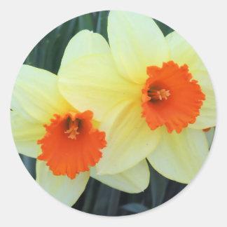 Yellow and Orange Daffodils Classic Round Sticker