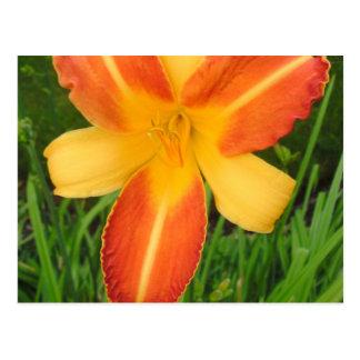 Yellow and orange flower postcard
