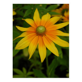 Yellow and Orange Flower Postcard