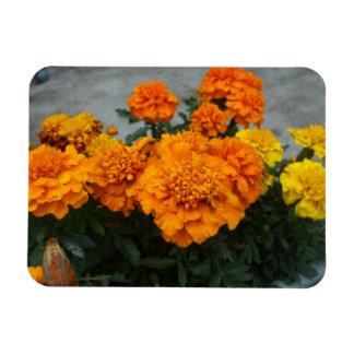 Yellow and Orange Marigold Blooms Rectangular Photo Magnet